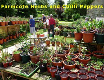 Farmcote Herbs and Chillis